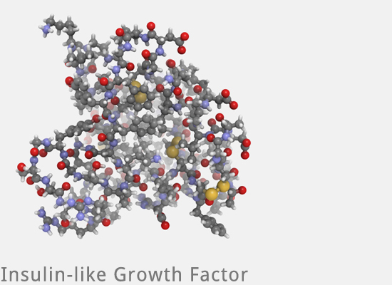 Eigenbluttherapie - Growth Factor IGF 1 Insulin like PRP bei Mesowelt