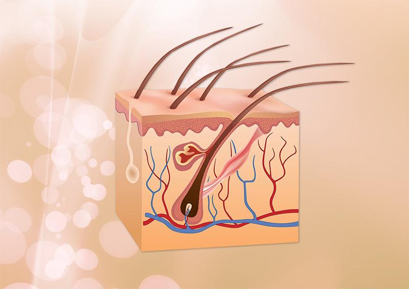 dauerhafte-Haarentfernung---Haarwurzel
