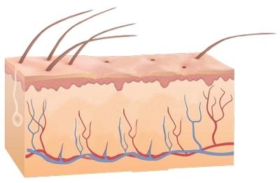 Funktionsprizip-der-Laserhaarentfernung-nach-der-Haarentfernung