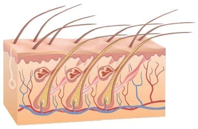 Funktionsprizip-der-Laserhaarentfernung-vor-der-Haarentfernung