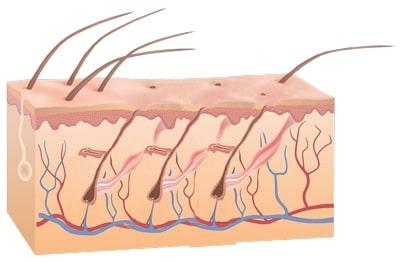 Funktionsprizip-der-Laserhaarentfernung-während-der-Haarentfernung