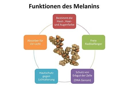 Funktionen des Melanins